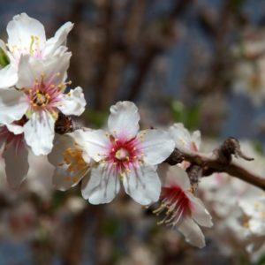 Mercoledì 9 maggio | Almonds & Flowers